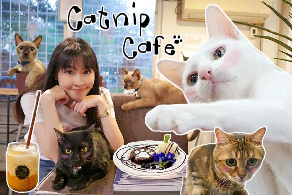 Catnip Cafe กาแฟอร่อยมาก เค้กอร่อยสุด คาเฟ่ที่มีแมว แต่ไม่ใช่คาเฟ่แมว